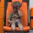 Omran Daqneesh (5) in an ambulance after an airstrike on Aleppo, Syria Photo: Reuters