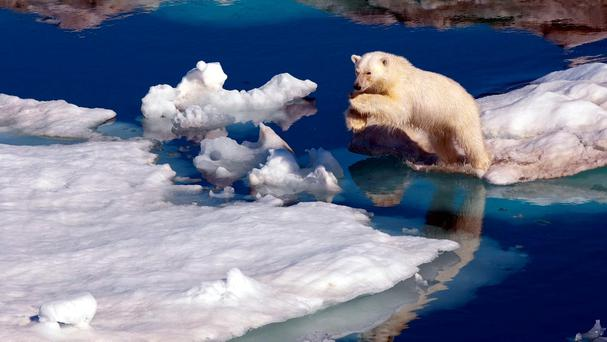 DISAPPEARING FAST: People tend to think of an ice-free Arctic in summer in terms of it merely being a symbol of global change, but apart from the loss of habitat for animals like this polar bear, sea-level rises all over the world will also accelerate