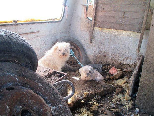 The dogs were discovered in the back of an old caravan