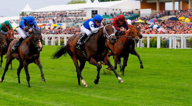 Lightning Spear finishing third in the Group One Queen Anne Stakes at Ascot behind Tepin and Belardo. Photo: Cranhamphoto.com