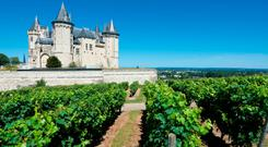 Saumur castle in the Loire River, surrounded by vineyards
