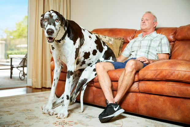 The world's tallest living dog Lizzy, the Great Dane from Florida with owner Greg as they appear in this year's Guinness World Records. Photo: Al Diaz/Guinness World Records/PA Wire