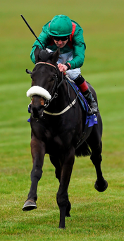 Pat Smullen and Harzand. Photo: Ramsey Cardy/Sportsfile
