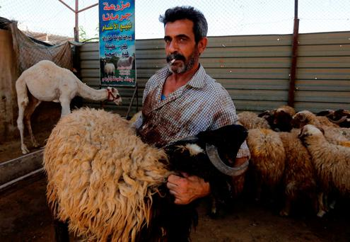 A livestock dealer with his sheep for sale in the Syrian capital Damascus on the second day of the Eid al-Adha Muslim holiday. Photo: Getty