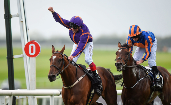 Order Of St George (right) has to bounce back from his St Leger disappointment, Photo: Cody Glenn/Sportsfile