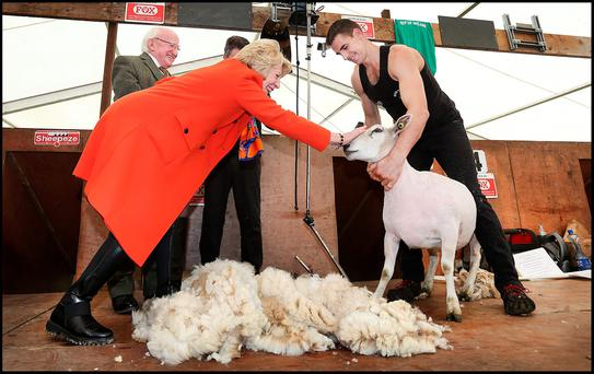 First lady Sabina Higgins pets a sheep freshly shorn by world record holder Ivan Scott at the Ploughing. Photo: Steve Humphreys
