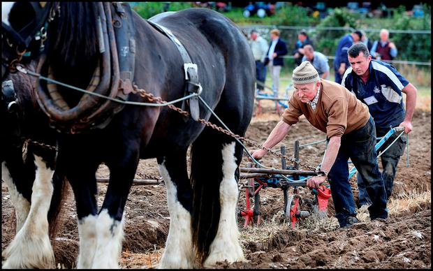 JJ Delaney and his son Jeremiah, from Macroom, Co Cork, competing in the ploughing. Photo: Steve Humphreys