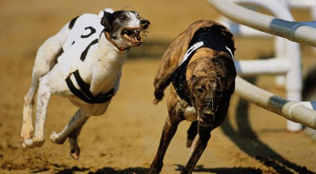 Pat Norris has this dog razor-sharp at the moment and as the solitary seeded runner he has a charmed draw in this contest.