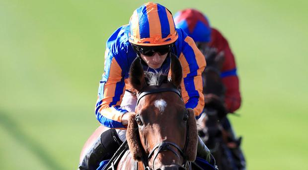 The Aidan O'Brien trained Cougar Mountain, with Ryan Moore up, on their way to winning the Shadwell Joel Stakes at Newmarket yesterday. Picture: PA
