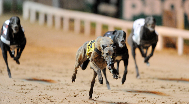 Ballymac Matt returns to Shelbourne Park this evening for the opening round of the Mulvaney Bookmakers Family Memorial 600. Stock picture: Sportsfile