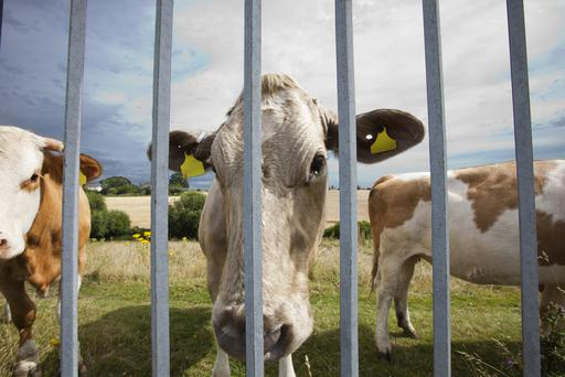 Extra beef supplies are likely to put prices under pressure