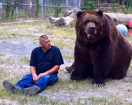 Ussuri Brown Bear Vs Grizzly Meet Jimmy the 9 foot ...