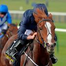 Alice Springs and Ryan Moore