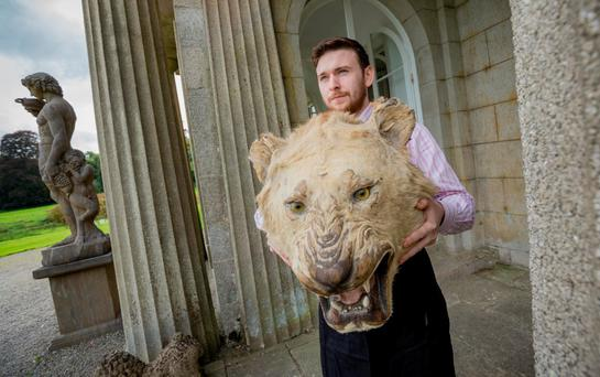 Joe Collins of Mealy's Fine Art Auctioneers holds a Victorian stuffed Indian tiger's head at the sale of items from Castlemartin House, Co. Kildare – comprising fine antiques and decorative art from the private collection of Sir Anthony O'Reilly and of Kilfane House on the instructions of the Clarke family. Photo: Dylan Vaughan.