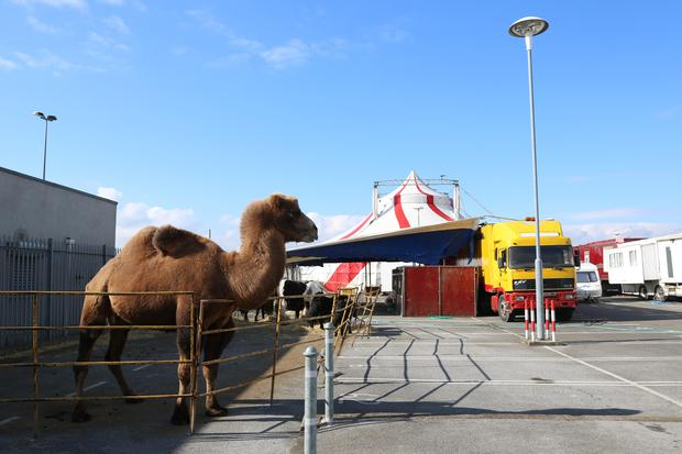 finest selection 4f43e 5bbcb Circus under fire after footage emerges of camel in Dublin ...