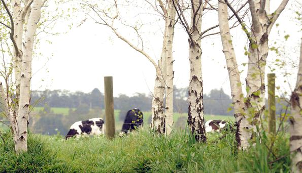 Analysts in New Zealand are predicting that supply volumes will continue to ease.Picture: Fonterra.
