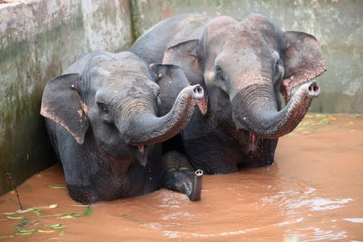 Two elephants and a baby elephant trapped in the reservoir after having fallen inside when drinking water at a farm in Xishuangbanna, Yunnan province. / AFP PHOTO / STR / China OUTSTR/AFP/Getty Images