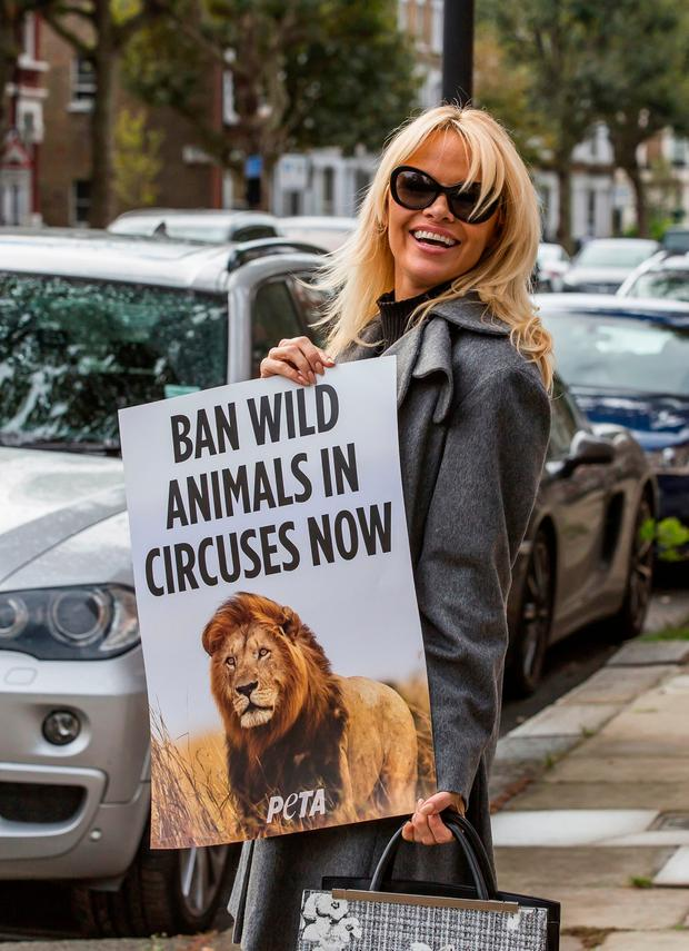 Pamela Anderson poses for photographers with a poster in support of 'People For The Ethical Treatment Of Animals' in London (Photo by Grant Pollard/Invision/AP)