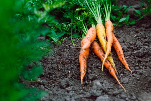 Fresh organic carrots - the Irish Seed Savers' Association were the big winners in this year's food awards