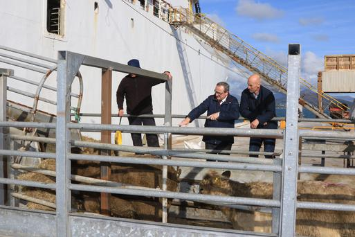 The loading of Cattle at Greenore Port on Wednesday 19th October 2016. Picture: Thos Caffrey / Newsfile