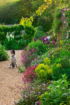 Charm offensive: a walled garden containing Irises, Euphorbias and Erysimum