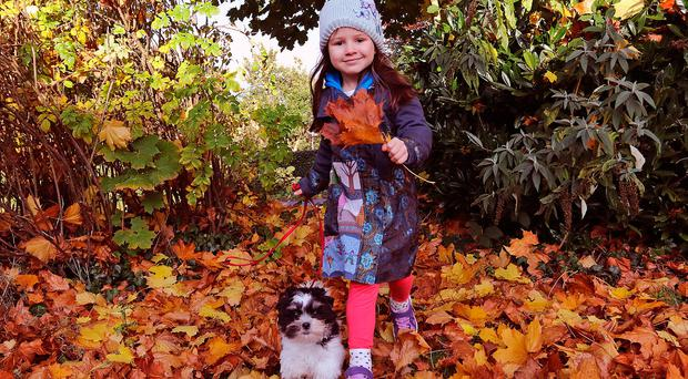 Sarah Butt (5) and her buddy Dougal were enjoying the beautiful Autumn sunshine and colours as they take a walk in Cavan yesterday. Photo: Lorraine Teevan