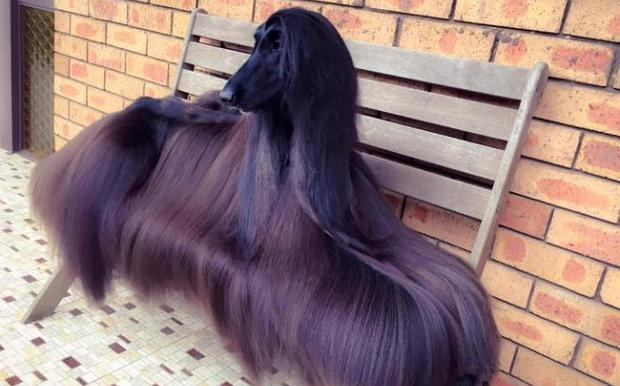 Her hair is as glossy enough to feature in a shampoo advert Credit: Facebook/Luke Kavanagh