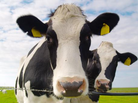 A new numbering format is required for cattle tags to ensure that the numbering system in place in Ireland is compatible with a new EU wide electronic identification (EID) format.