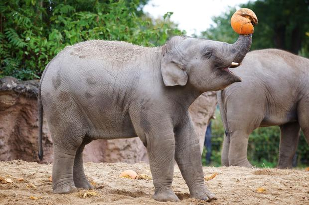 The animals are getting into the spirit of Halloween at Dublin Zoo