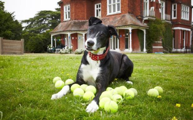 Paul O'Grady said he was thrilled Bud had been re-homed