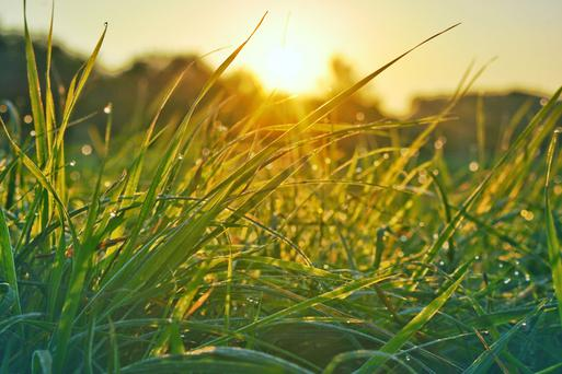 There will be very little growth in late November, December, January and February, and the grass that is currently on paddocks is the grass that you will have to graze early next spring, provided you leave it in situ now.