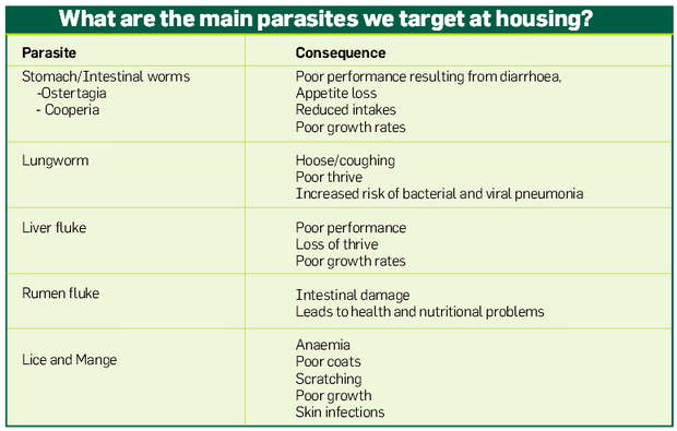 How to break the parasite cycle when housing cattle - Farming