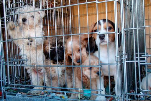 Puppy farm: You should use a local rescue centre instead