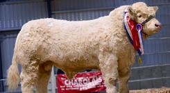 The Charolais society claim that breeding bulls will lose out in the sales ring due to the absence of the data.