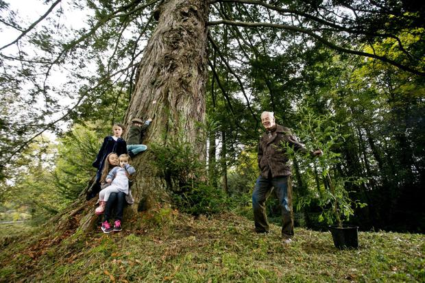 The Giants Grove of redwood trees will be planted in the grounds of Birr Castle