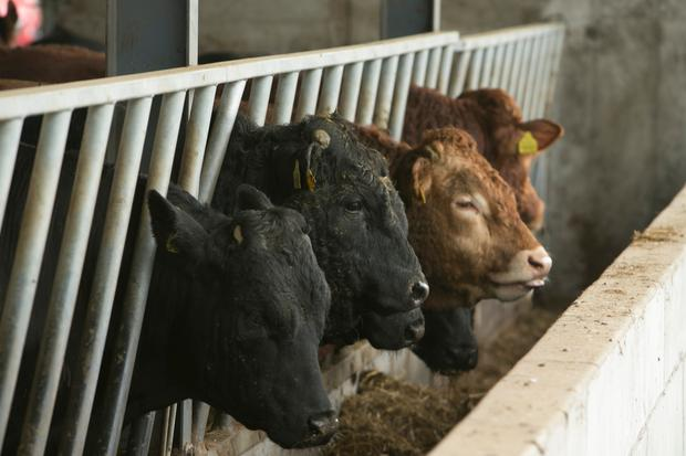 """The more beef we import the more downward pressure there is on producer prices."""