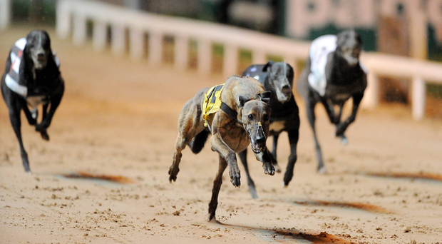 Bubbly Mustang and Bull Run Bolt, which chased home Wilbury in the Dublin Coach Juvenile Derby final, are also among the entries. Stock picture: Sportsfile
