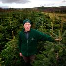 Christy Kavanagh pictured on his Christmas tree farm in Newtownmountkennedy, Co. Wicklow. Picture- Gerry Mooney