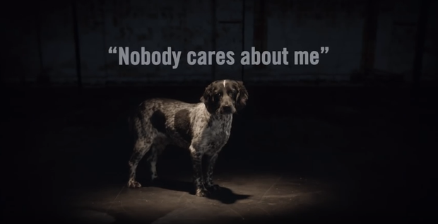 A video has been released by Dogs Trust as part of their #StopKeepingMum campaign