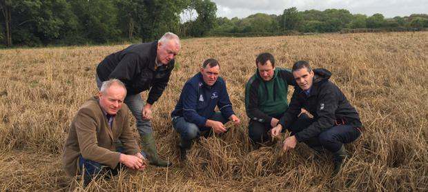 IFA President Joe Healy inspecting crops after poor harvest. Image: IFA
