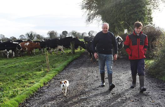 Farmer John Sheridan and his son Matthew (with a little help from Benson the dog), move the animals on their farm in Mostrim, Co. Longford. Photo: Lorraine Teevan