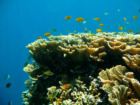 The Great Barrier Reef (Photo: Steve Simpson/University of Bristol/PA Wire)
