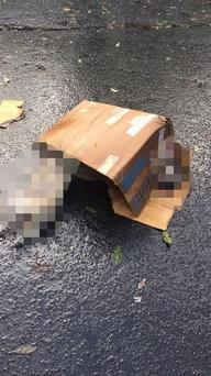DSPCA investigating the discovery of two dogs in a shopping centre carpark