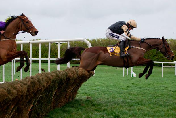 Nichols Canyon leads Willie Mullins' quintet in tomorrow's Morgiana Hurdle at Punchestown. Pic: Racing Post