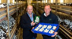 Sean Gallagher with Codd Mushrooms director Leslie Codd in Tullow, Co Carlow Picture: Mark Condren