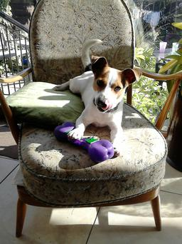 Frances Browner's pet Jack Russell, Lucky