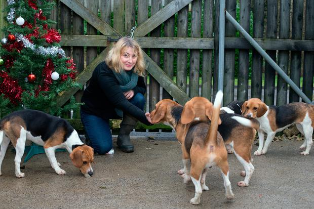 Maeve Sheehan welcomes the dogs Picture: Tony Gavin