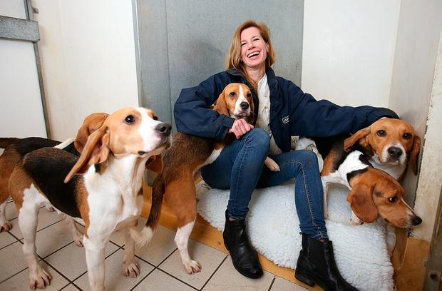 Eva Ellis, manager of the ISPCA Longford centre, with some of the beagles Picture: Frank McGrath