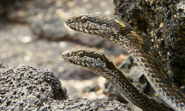 The 'Medusa' snakes. Pic: BBC Planet Earth II