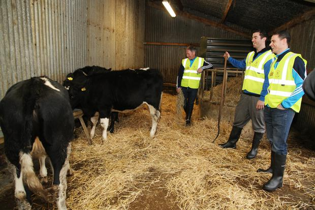 Jim Gavin, Stephen Cluxton and Michael Darragh Macauley as they visited Shelton Abbey prison and calves being sent to Africa.